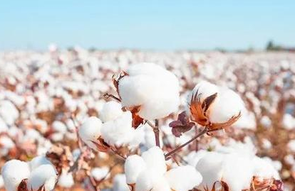 H&M棉花事件之后,多个国内服饰集