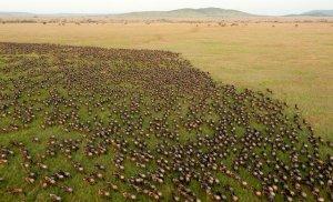 看了坦桑尼亚的国家公园门票,才知道非洲去不起