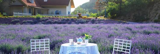 云峰山童话树屋与美景相伴 图片源自品牌官网