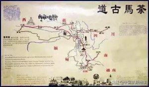 茶的发展轨迹,带你了解茶的历史